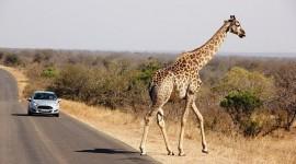 Con auto - Explorando el Parque Kruger
